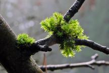 Lysande grön mossa.