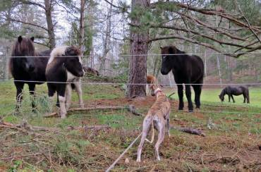 15 november. Olle hälsar på hästarna.