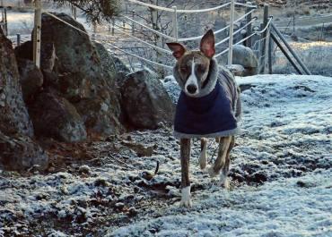 Olle har klätt sig i vinterjackan ...