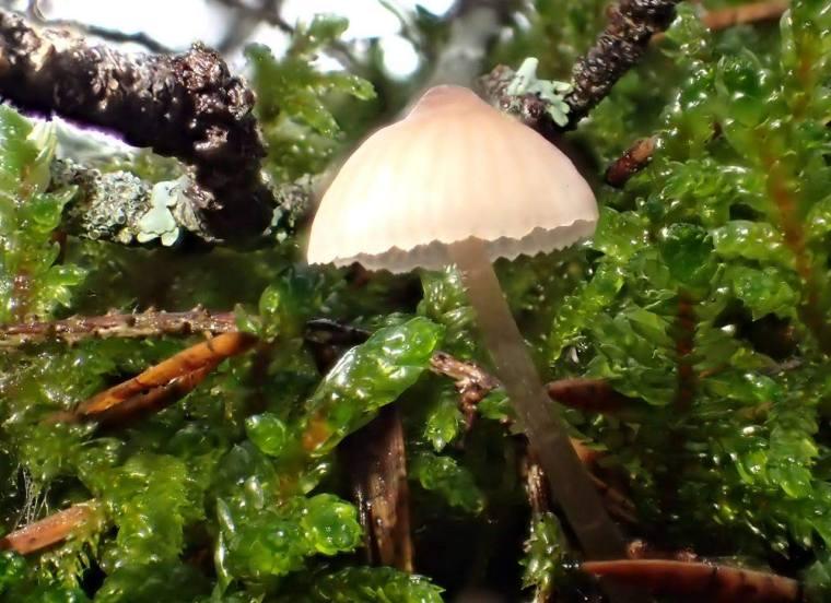 En liten rosatonad svamp, som jag inte har en aning om vad den heter ...