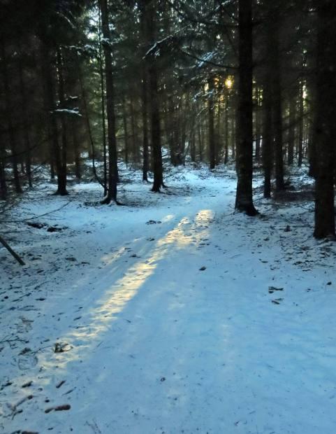 Solens strålar hittar ner mellan träden ...