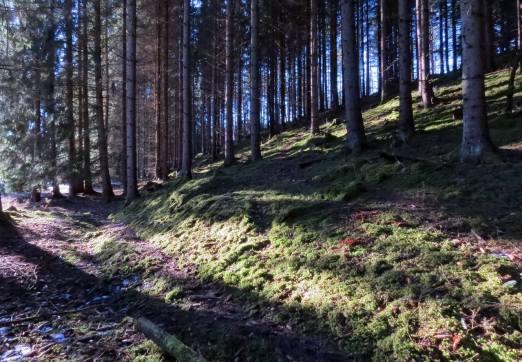Ingen snö i skogen - bara grön skön mossa.