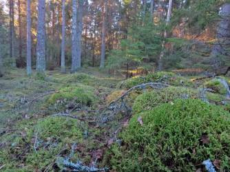 ... och snart var jag nera i den gamla delen av skogen ...