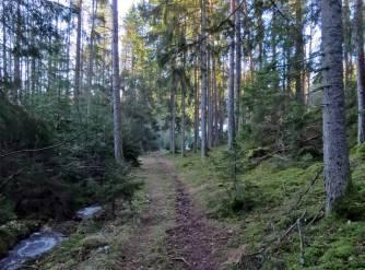Fortsatte så den lilla skogsvägen ...