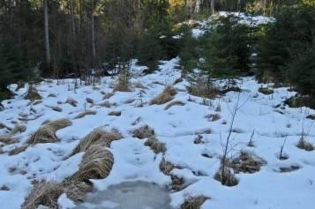 ... över gläntan där snön fortfarande låg kvar. Glad att det var minusgrader på morgonen för här var det rejält mycket vatten under snö och is.