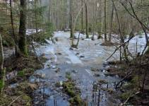 Känner glädje över att kärret har så högt vattenstånd ...