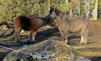 Hälsade på hästarna i hagen ... de brydde sig som vanligt inte om mig ...