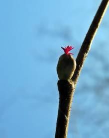 ... blomman är pytteliten!
