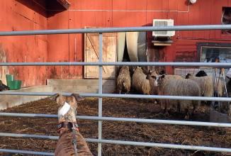 ... så då går vi till baksidan ... där Olle kan titta på dem han också.