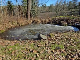 ... och dammen är fortfarande frusen.