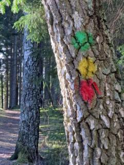 """Följ """"skyltningen"""" ... eller prickarna på träden."""