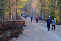 Här har vi precis kommit fram till Kårnskogsmossens naturreservat ... och går vägen fram till platsen där vi har störst chans att se och höra orrarna.