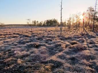 Frosten glittrar i solen ...