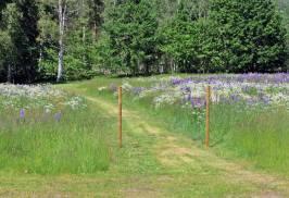 Från ställplatsen går en fin stig över blomsterängen ...