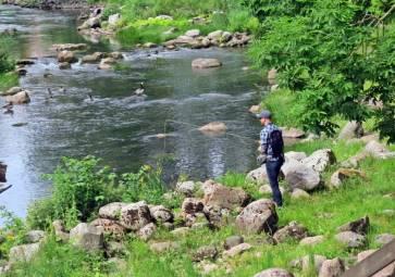 ... en populär plats, både av fritidsfiskare och fåglar. Har man tur kan man få en öring på kroken ...