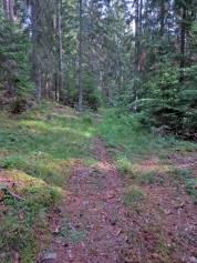 Vek av och följde stigen in i skogen ...