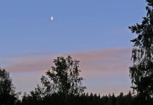 tidig sommarmorgon