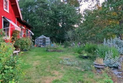 Gräsmattan som inte längre kan kallas gräsmatta ... har inte hämtat sig från förra året ...