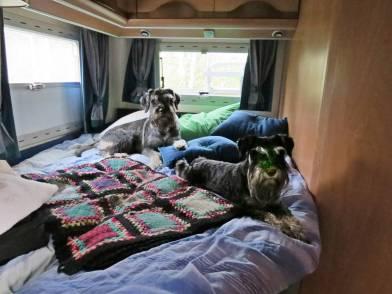 när vi flyttade in i vår husbil på kvällen intog de raskt vår säng :) ... med tillåtelse förstås!