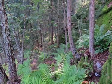 En del av skogen ...