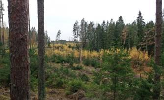 En gång en fin gammal svampskog ...