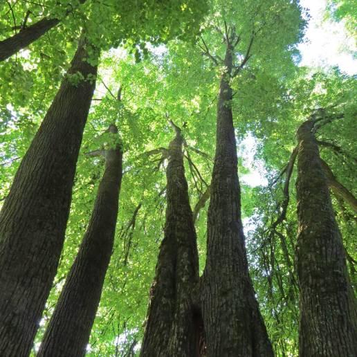 En mäktig känsla att stå där i mitten av de stora träden ...