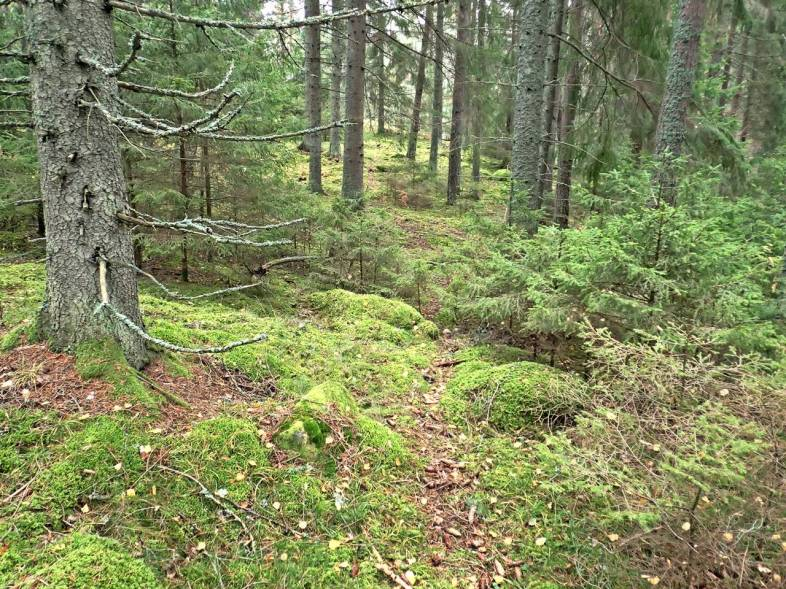 """En del av """"min"""" skog ..."""
