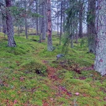 Skogen är fantastisk ...