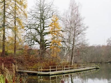 Lärkträdens gula barr lyser upp ...