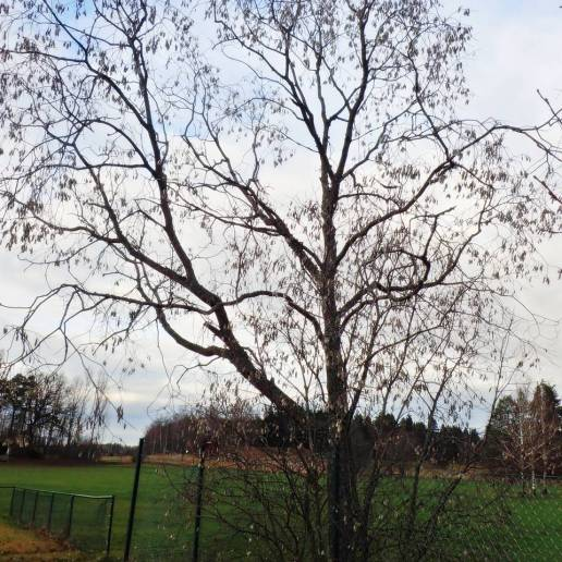 Jolsterträd/ buske ...
