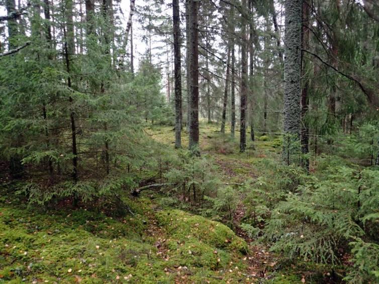 Först genom skogen ...