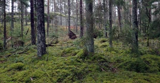 Genväg genom en annan skog ...