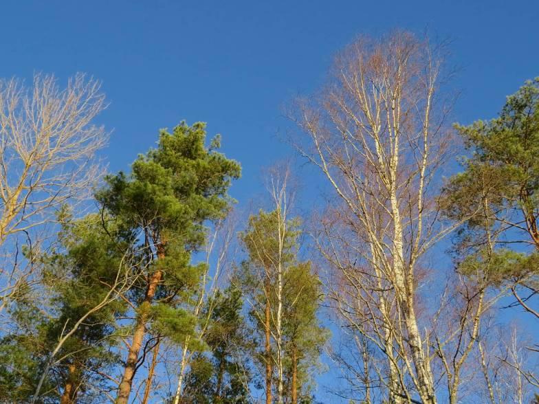 Blå himmel ...