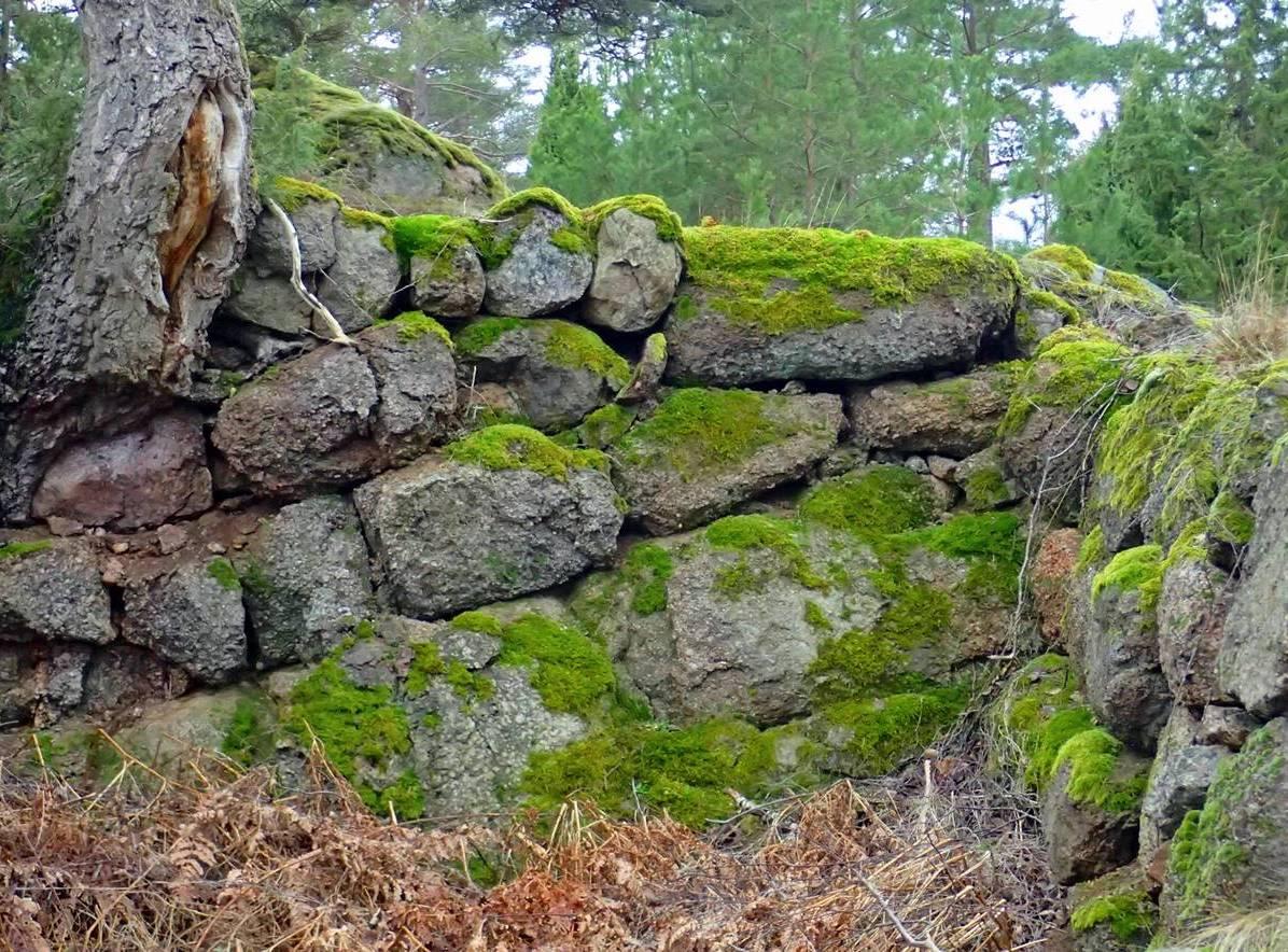 En gammal mur ...