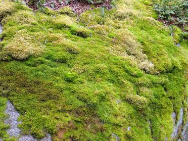 i olika gröna nyanser