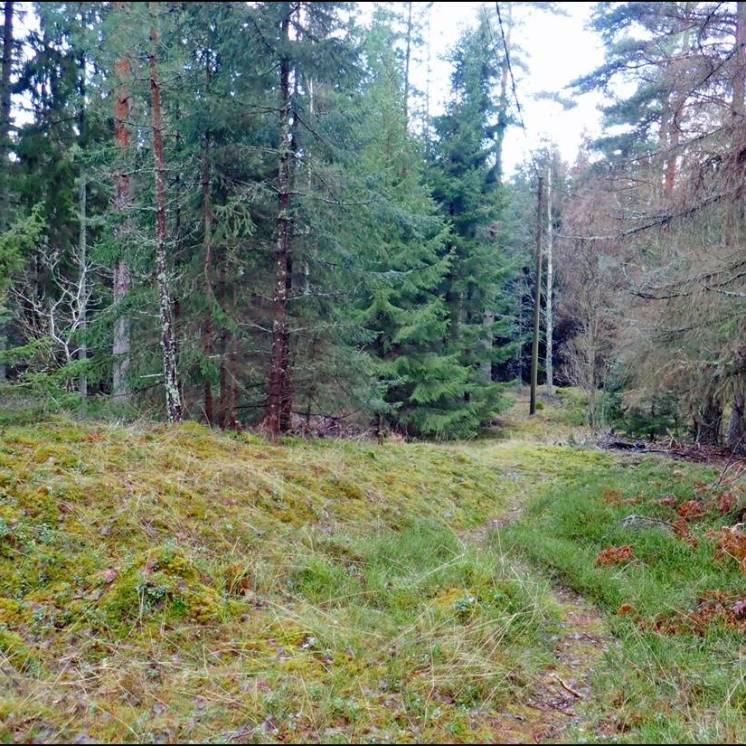 Stigen där de flesta av mina skogspromenader börjar ...