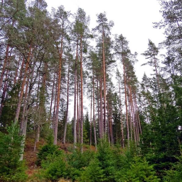 Stora och små träd ...