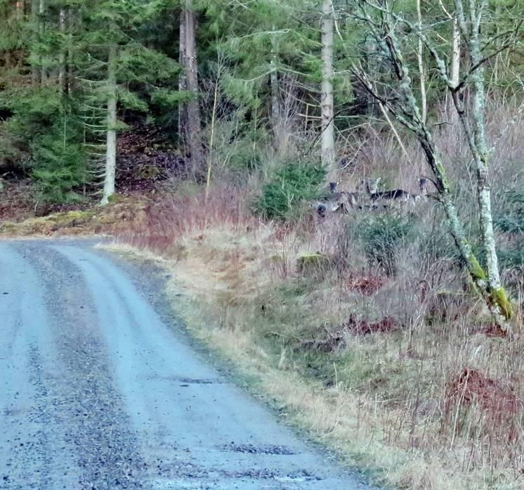 Ser du dem? Står strax t.h. om mitten och funderar på om de ska gå över vägen ...