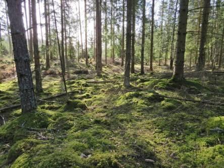 jag kunde njuta av fina skogspromenader