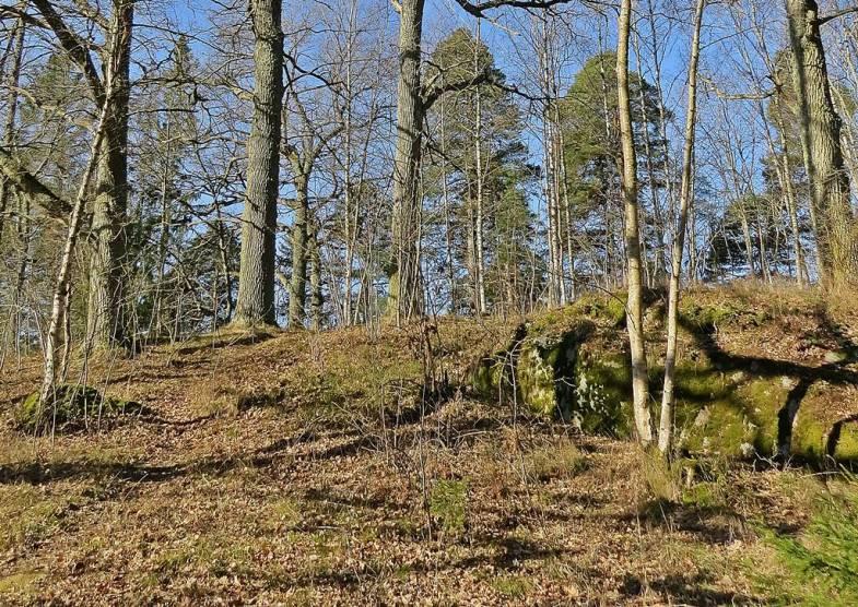När man kommer ner på andra sidan och passerar badstranden kommer man till en fantastisk udde med gamla ekar och lite andra träd ...