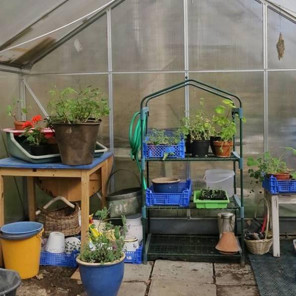 Växthuset är skurat, både inne och ute ...