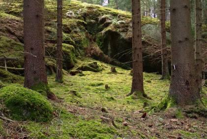 Skogen ger tröst och lugn ...