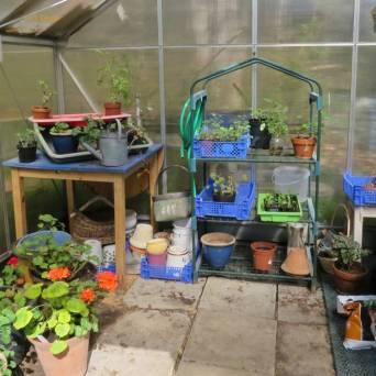Växthuset är skurat och städat ...