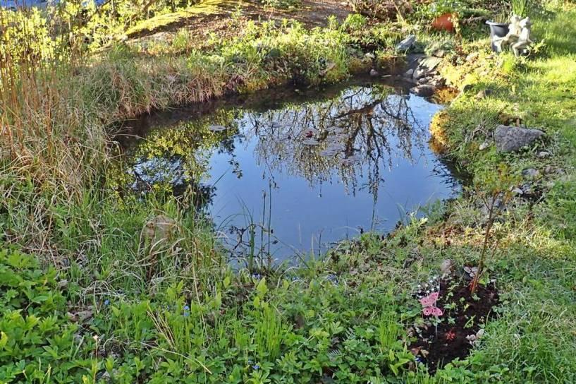 ... en knallblå himmel speglar sig i dammen ...